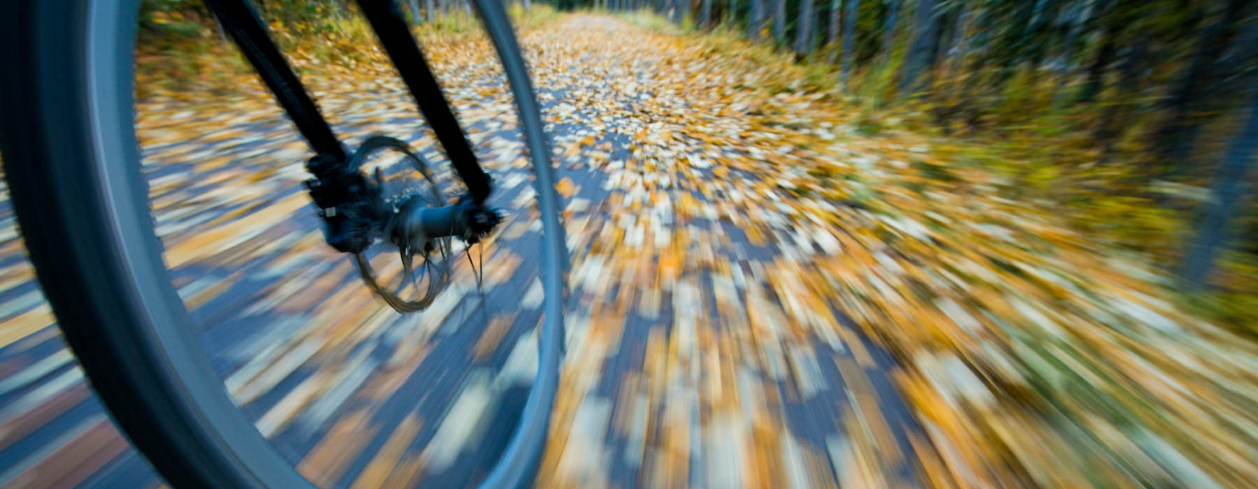bicycle speeds down paved trail with fallen leaves